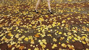 É preciso deixar cair algumas folhas para fortalecer a árvore.