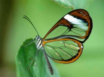 O que seria da borboleta se apenas a lagarta tivesse razão?